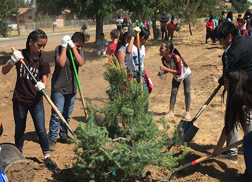 Team of students planting trees