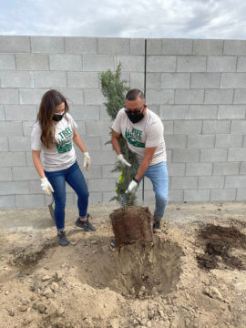 man and woman planting tree in dirt in front of a wall